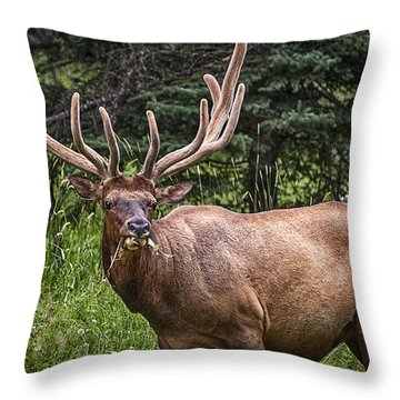 Elk Buck Throw Pillow