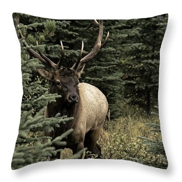 Elk Bull Throw Pillow
