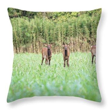 Elk Calves Throw Pillow