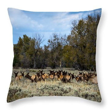 Throw Pillow featuring the photograph Elk Family by Sandy Molinaro