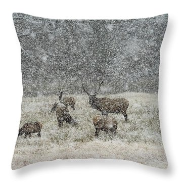 Elk Harem In Falling Snow Throw Pillow