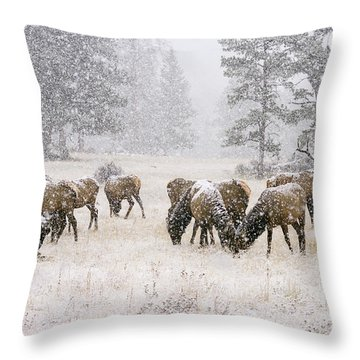 Elk In A Snow Storm - 1135 Throw Pillow