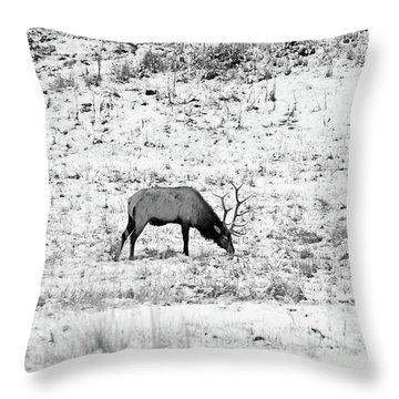Elk In Black And White - Estes Park Throw Pillow