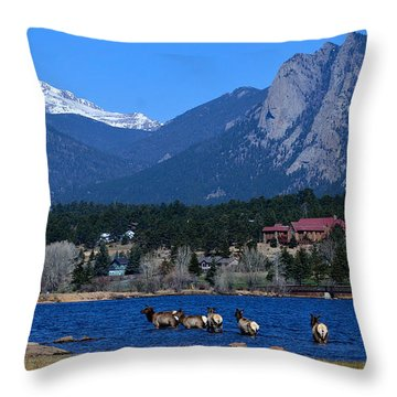 Elk In Lake Estes 1 Throw Pillow