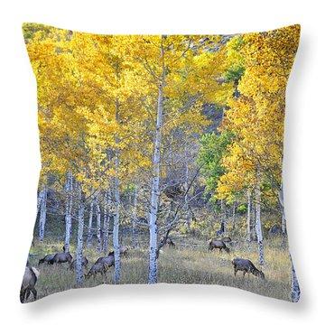 Elk In Rmnp Colorado Throw Pillow by Nava Thompson