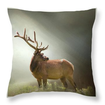Throw Pillow featuring the photograph Elk In Suns Rays by David and Carol Kelly