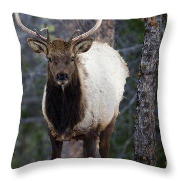 Elk In The Rockies Throw Pillow