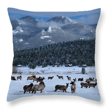 Elk In The Snow Throw Pillow
