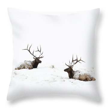 Elk Laying In A Snow Covered Meadow - 9069 Throw Pillow