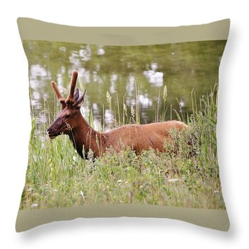 Throw Pillow featuring the photograph Elk Of Jasper... by Al Fritz