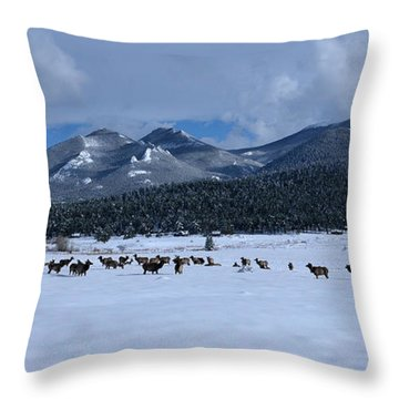 Elk On A Snow Covered Moraine Throw Pillow