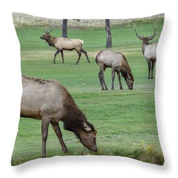 Elk On Golf Course Estes Park Colorado Throw Pillow