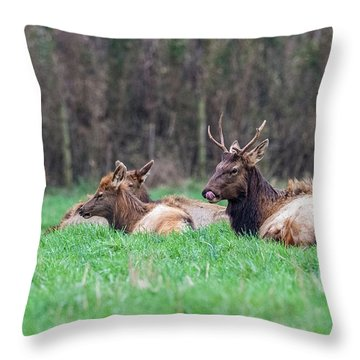 Throw Pillow featuring the photograph Elk Relaxing by Paul Freidlund