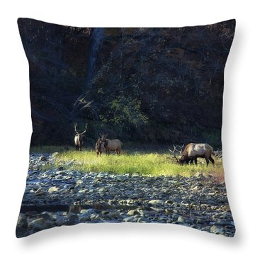 Throw Pillow featuring the photograph Elk River Crossing At Sunrise by Michael Dougherty