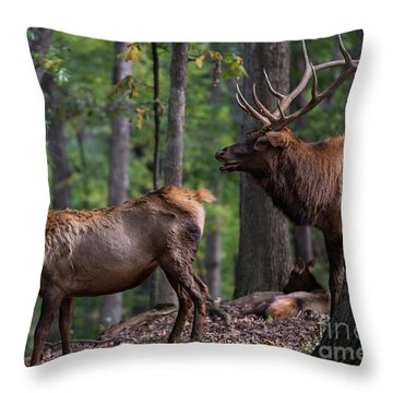 Elk Romance Throw Pillow