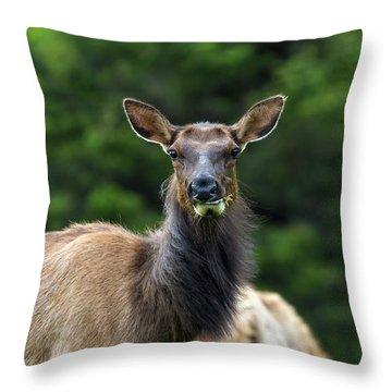Elk Staring Closeup Portrait Throw Pillow