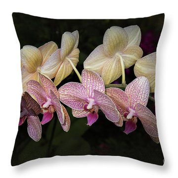 Throw Pillow featuring the photograph Eloise by Elaine Teague