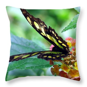 Elusive Butterfly Throw Pillow by Betty Buller Whitehead