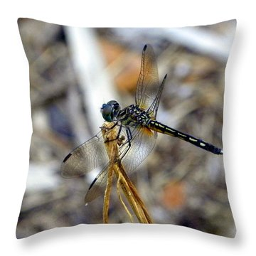 Throw Pillow featuring the photograph Emerald Beauty by Terri Mills