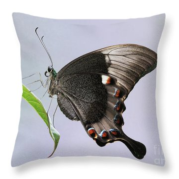 Emerald Peacock Swallowtail Butterfly V2 Throw Pillow