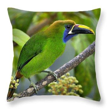 Emerald Toucanet Throw Pillow by Tony Beck