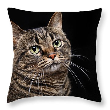 Emmy The Cat Ponder Throw Pillow