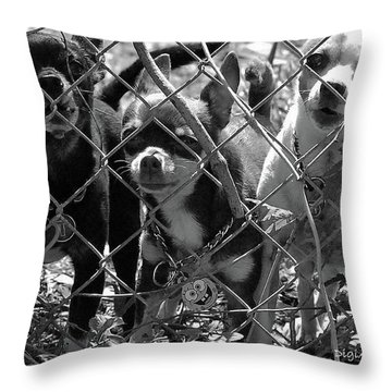 Encarcelados Chihuahuas Throw Pillow by DigiArt Diaries by Vicky B Fuller