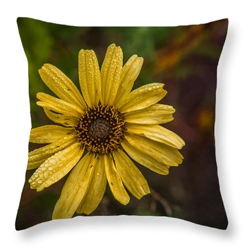 Encelia  Throw Pillow