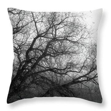 Throw Pillow featuring the photograph Enchanted Forest by Ana V Ramirez