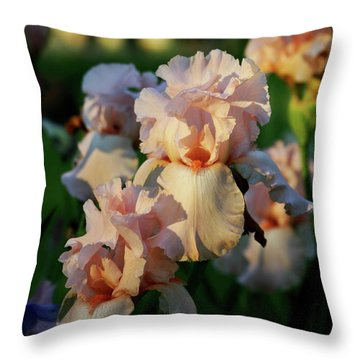 End Of Day Pink Irises 6702 H_2 Throw Pillow