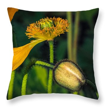 Endings And Beginnings Throw Pillow