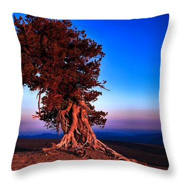Throw Pillow featuring the photograph Endurance by Laura Ragland