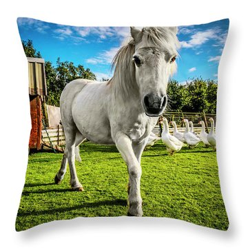 English Gypsy Horse Throw Pillow