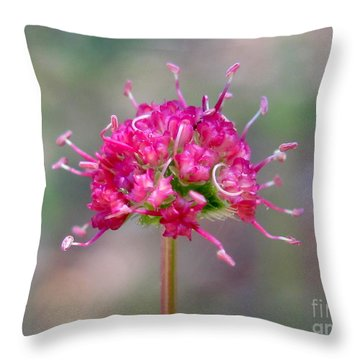 Eriogonum Pyrolaefolium Throw Pillow by Irina Hays