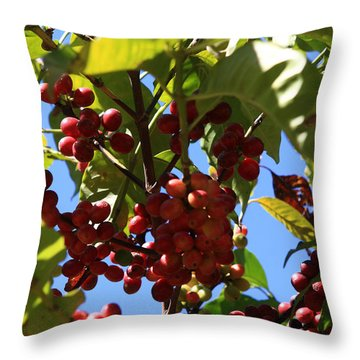 Ethiopian Coffee Beans Throw Pillow