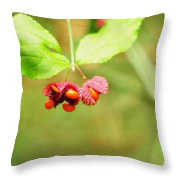 Euonymus Americanus  American Strawberry Bush Throw Pillow