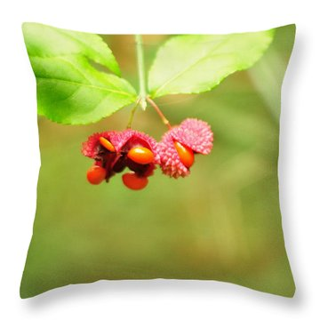 Euonymus Americanus  American Strawberry Bush Throw Pillow by Rebecca Sherman