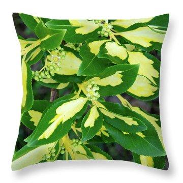 Euonymus Blondy Shrub 2 Throw Pillow