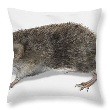 Eurasian Common Shrew Sorex Araneus - Musaraigne Carrelet - Musa Throw Pillow