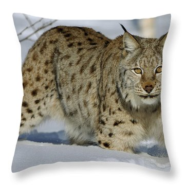 Eurasian Lynx  In Snow Throw Pillow