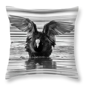 Eurasian Or Common Coot, Fulicula Atra, Duck Throw Pillow by Elenarts - Elena Duvernay photo