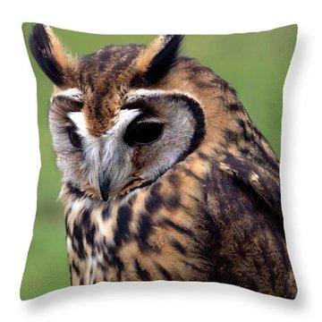 Eurasian Striped  Owl Throw Pillow by Stephen Melia
