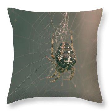 European Garden Spider B Throw Pillow