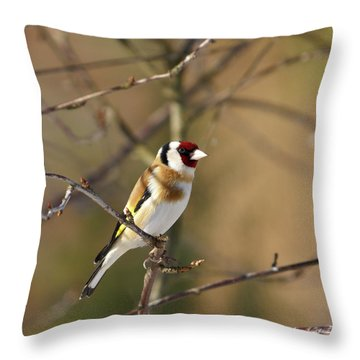 European Goldfinch 2 Throw Pillow by Jouko Lehto