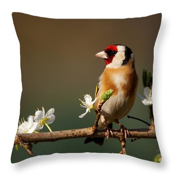 European Goldfinch On Flowering Blackthorn. Throw Pillow
