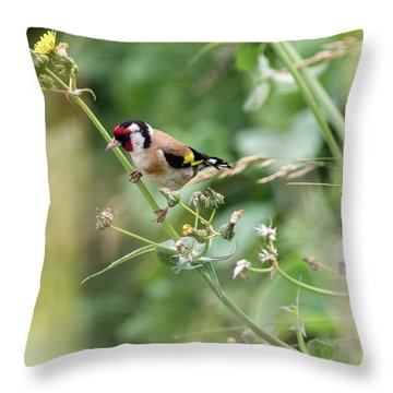 European Goldfinch Perched On Flower Stem B Throw Pillow