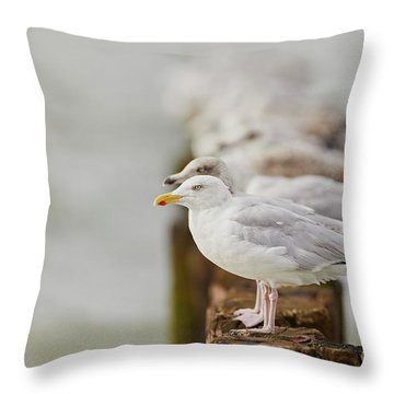 European Herring Gulls In A Row Fading In The Background Throw Pillow