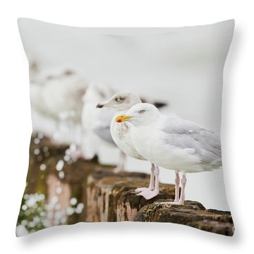 European Herring Gulls In A Row  Throw Pillow