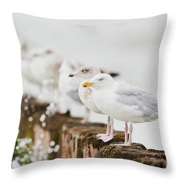 European Herring Gulls In A Row  Throw Pillow
