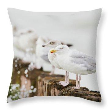 Throw Pillow featuring the photograph European Herring Gulls In A Row  by Nick Biemans
